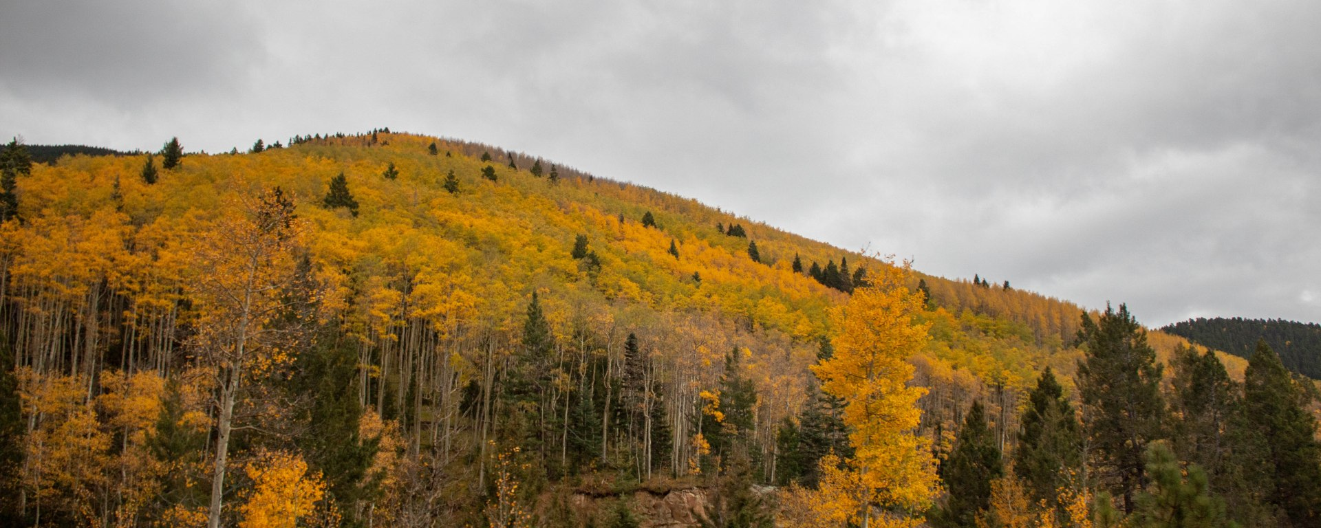 The aspens shown magnificently, even in the gloomy weather.