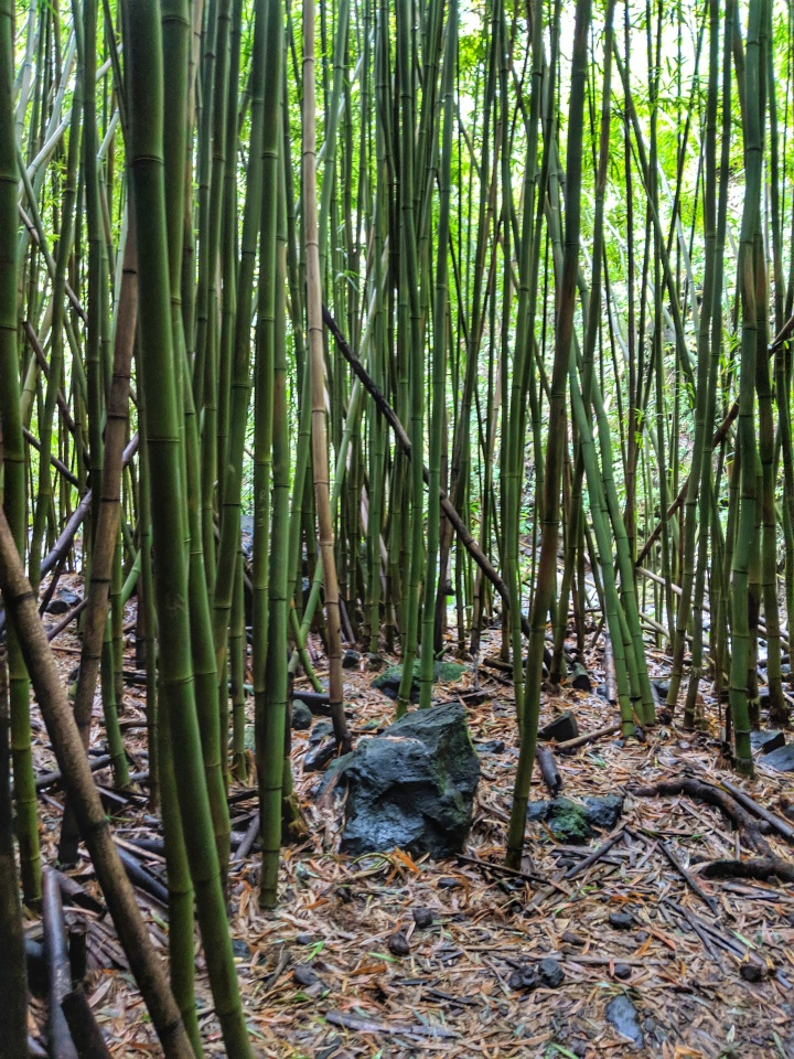 Listen to the wind whistle through the bamboo trees—a musical experience.
