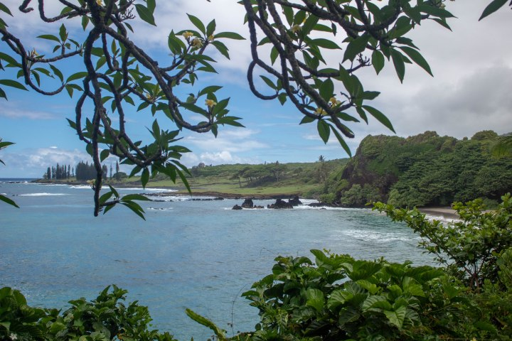 The beautiful Hamoa Beach, as seen through flowering trees.